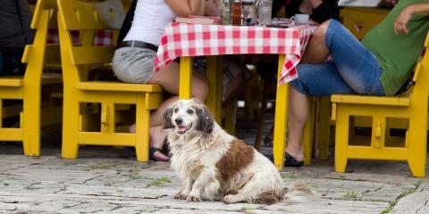 3 Reasons to Seek Out a Dog-Friendly Restaurant, Waialua, Hawaii