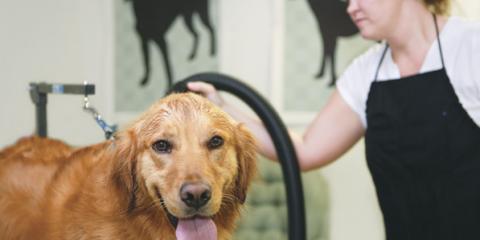 Local Waxhaw Dog Groomer Explains Heartworm Disease in Dogs & Cats, Waxhaw, North Carolina