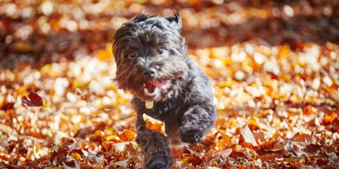 KY's Leading Dog Groomer Shares 5 Canine-Friendly Fall Activities, Nicholasville, Kentucky