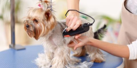 A Guide To Keeping Your Dogs Hair Comfortably Cut
