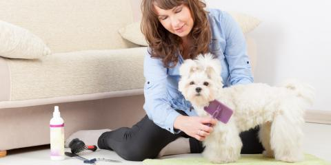 5 Dog Grooming Tips for New Pet Owners, Newport-Fort Thomas, Kentucky