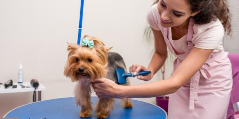 Why You Should Always Trust Professionals for Pet Grooming, Keaau, Hawaii