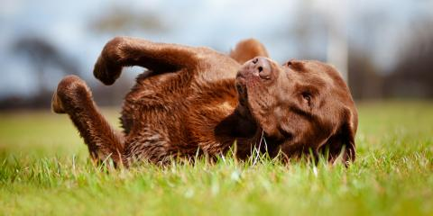 A Guide to Your Dog's Rolling Behavior, ,