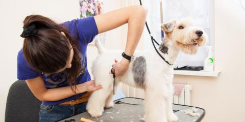 An Experienced Dog Grooming Team Answers 4 Frequently Asked Questions, Lincoln, Nebraska