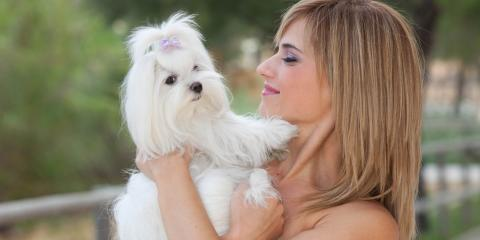 3 Useful Tips for Long-Haired Dog Grooming, Miami, Ohio