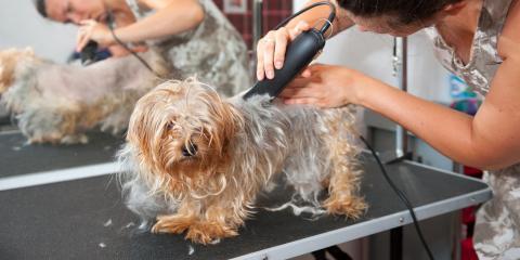 3 Popular Dog Haircuts, Miami, Ohio