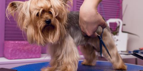 Why Dog Grooming Is Beneficial to Your Pet's Well-Being, Seattle, Washington
