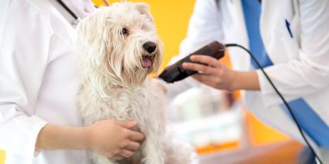 Dog Grooming Experts Discuss the Hazards of Coat Shaving, Newport-Fort Thomas, Kentucky