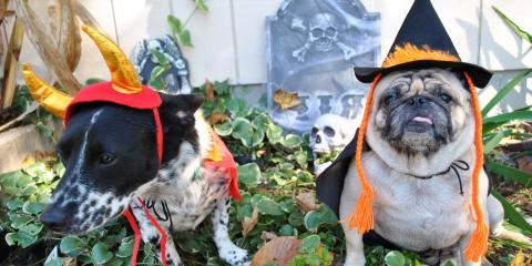 Do's & Don'ts of Dressing Up Your Pet for Halloween, Newport-Fort Thomas, Kentucky