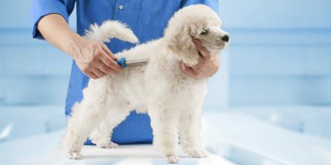 3 Reasons to Schedule a Dog Haircut , Lincoln, Nebraska