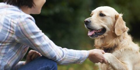 3 Reasons Your Dog Should Be Evaluated Before Training, Milford, Connecticut