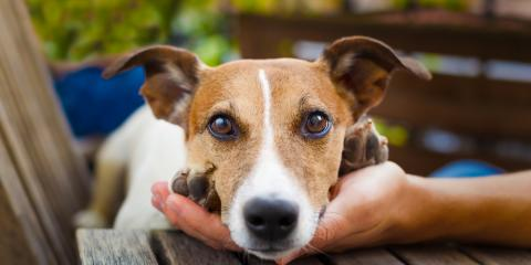 Eye Care Tips for Your Pup From Churchville's Trusted Dog Kennel , Churchville, New York