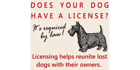 Time to Renew Hamilton County Dog License, Cincinnati, Ohio