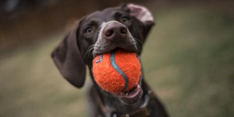 3 Benefits of a Dog Run Fence, Anchorage, Alaska