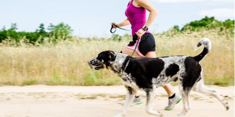 Veterinarians Share 3 Factors for Determining Your Dog's Exercise Needs, Piney, Missouri