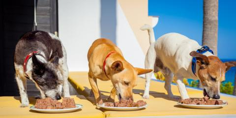 4 Different Types of Dog Food & Their Benefits, Bethel, Ohio