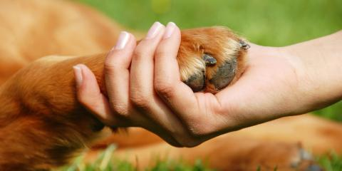 Getting a New Dog? Important Questions to Ask a Dog Trainer First, Milford, Connecticut