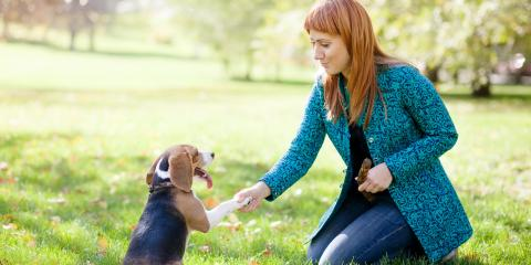3 Factors to Consider When Selecting a Dog Training Program, Defiance, Missouri
