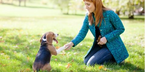 New Puppy? 4 Benefits of Working With a Professional Trainer, Easton, Connecticut