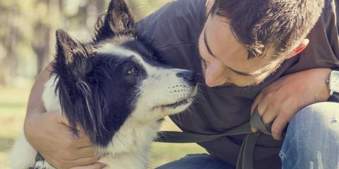 3 Ways To Properly Correct Your Canine When Dog Training, Milford, Connecticut