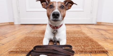 3 Tips to Stop Your Dog From Pulling on the Leash, Milford, Connecticut