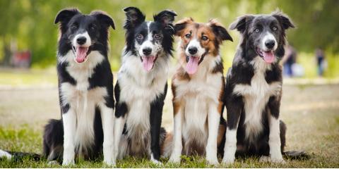 4 Benefits of Professional Dog Training, Walworth, New York