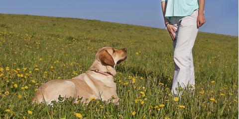 Why Hire a Professional for Dog Training, Defiance, Missouri