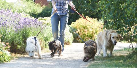 3 Reasons to Have a Personal Assistant Service Walk Your Dog, Bridgeport, Connecticut