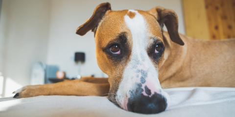 How to Deal with Your Dog's Separation Anxiety - Part 2, Fairfield, Ohio
