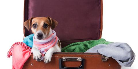Montgomery Animal Hospital Shares Tips for Traveling with Pets this Upcoming Holiday Season, Sycamore, Ohio