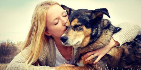 A Veterinarian Shares 3 Tips for Preventing Cancer in Pets, Foley, Alabama
