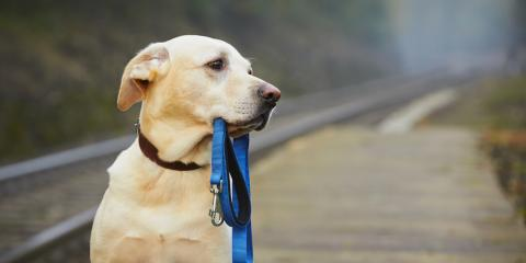 Foley's Veterinarians Answer Your Questions About Pet Diabetes, Foley, Alabama