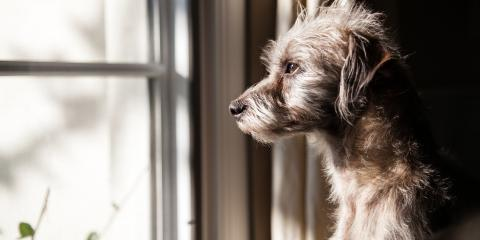 How to Deal with Your Dog's Separation Anxiety - Part 1, Fairfield, Ohio