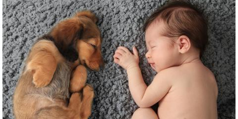 "Pets & Babies (Part 2) How to avoid ""Second Child Syndrome, Manhattan, New York"