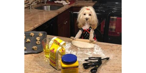 Pampered Chef VIRTUAL Party: You make hosting and saving animals look like a piece of cake!, Stratford, Connecticut