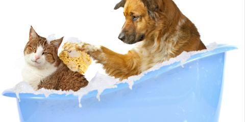 This Week Only !!!!!    Bath and Nail trim $20, Montgomery, Ohio