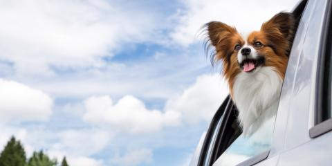 Dog Boarding Experts Help Your Pet Learn to Love the Car, Newport-Fort Thomas, Kentucky
