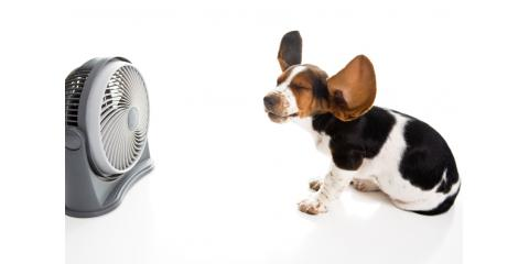 Recognizing and Treating Heat Stroke in Dogs, Middletown, Ohio