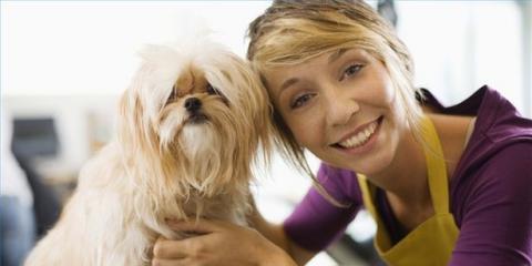 Mias bathhouse is hiring for pet grooming services mias mia039s bathhouse is hiring for pet grooming services manhattan solutioingenieria Gallery