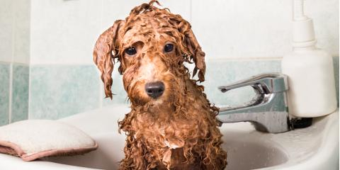 How Often Does Your Dog Need a Bath?  , Elk Grove, California
