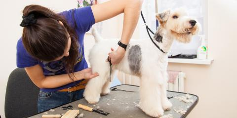 Dog Grooming Experts Share 5 Surprising Facts About Fleas & Ticks, Newport-Fort Thomas, Kentucky