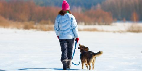 Dog Grooming Experts Share Reasons to Purchase Winter Boots for Your Dog, Newport-Fort Thomas, Kentucky