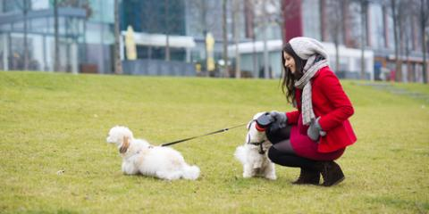Dog Grooming 101: Prevent Dry Winter Skin With These 5 Tips, Newport-Fort Thomas, Kentucky