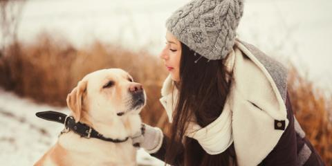 A Dog Grooming Specialist Shares 3 Cold Weather Tips for Shorthaired Dogs, Newport-Fort Thomas, Kentucky