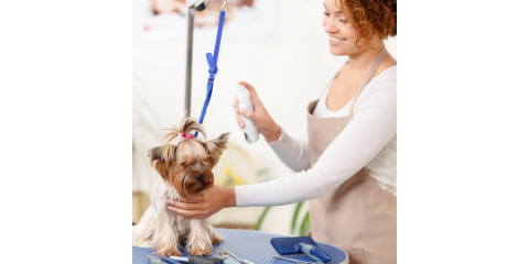 Dog Grooming Certification, Philadelphia, PA, Delaware