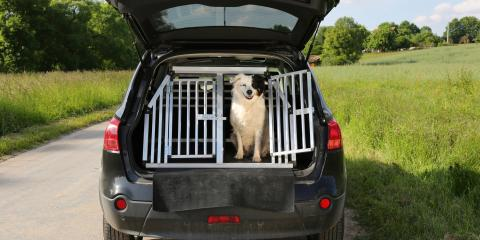 3 Veterinarian-Approved Tips for Pet Travel Safety Day, Penfield, New York