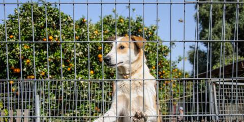 3 Benefits of Outdoor Dog Kennels, Ewa, Hawaii