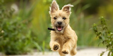 A Busy Dog Parent's Guide to Exercise, Royse City, Texas