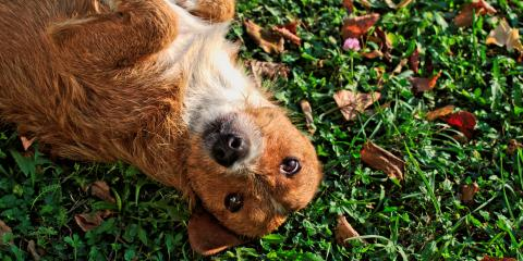 3 Tips for Keeping Your Pet Well Groomed, Conyers, Georgia