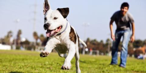 3 Major Types of Dog Training, Defiance, Missouri